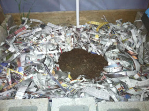 worm pile in newspaper