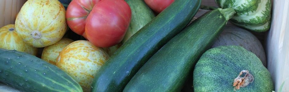Summertime Harvest Vegetables